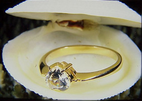 Diamond ring in shell